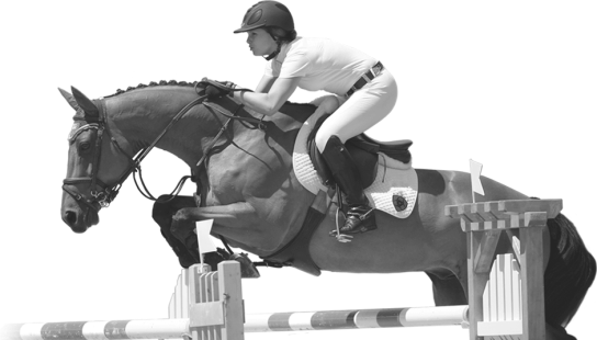 cavalli2.png